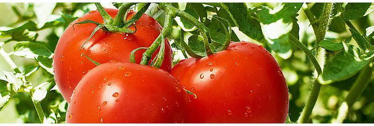томаты.740x250.jpg