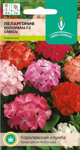 Пеларгония Колорама F2, смесь (Евро- семена) купить по цене 40 руб. в Орле